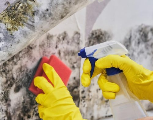 mold remediation company near me